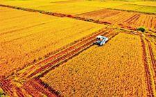 """今年起实施""""优质粮食工程"""" 我国将从三方面推进"""