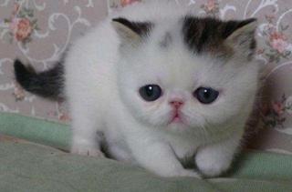 【宠物猫饲养】宠物猫饲养手册|宠物猫疾病指南|猫新闻