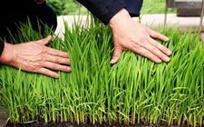 福建8个农业绿色高产高效创建项目获补助 每个400万元