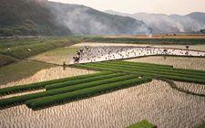 解读十九大报告中关于农村土地产权制度的改革