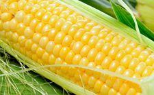 农业部、财政部共同实施的重点强农惠农政策来了!