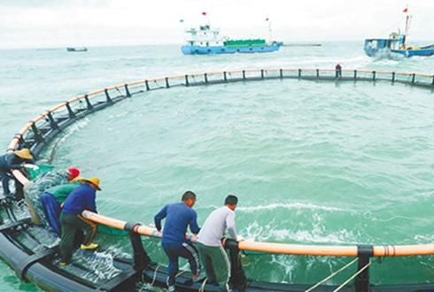 海南临高:深海网箱养殖铺就脱贫致富路