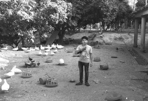 福建南安:大量鸡鸭和鸽子处于滞销 养殖户望卖完翻建漏雨房
