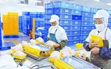 清新农村电商产业园预计今年销售额将超4亿元