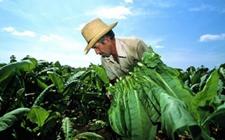 生产结构持续优化 农民脱贫致富步伐明显加快