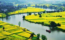 重庆:坚持农业农村优先发展 加快推进农业农村现代化