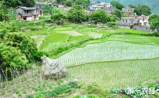 基层谈十九大报告:实施乡村振兴战略 加快推进农业农村现代