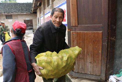贵州镇远:紫薯助农脱贫有成效 预计今年收入将达50万元