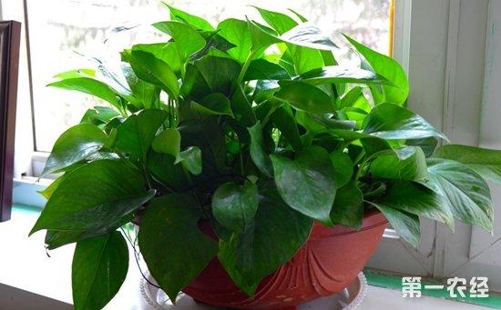 8种适合在室内养的盆栽植物介绍 没养过花的人都能养活