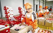 目前甘肃省已建成10个国家级出口食品农产品质量安全示范区