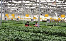 甘肃靖远县:积极培育现代农业发展新引擎 助推绿色有机农业发展
