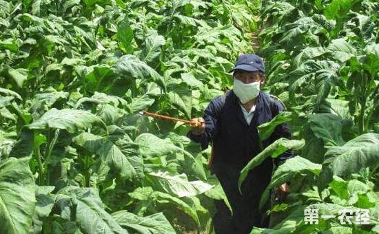 农药杀菌剂有效喷施的注意事项