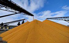 中储粮在服务收储制度改革和粮食宏观调控中取得新成效