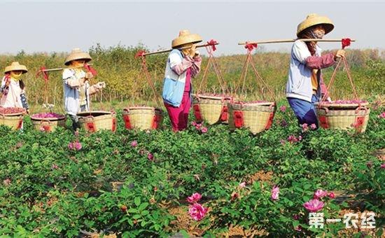 海南儋州市大力打造热带特色高效农业