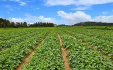 国产种子已占我国主要农作物面积的95%