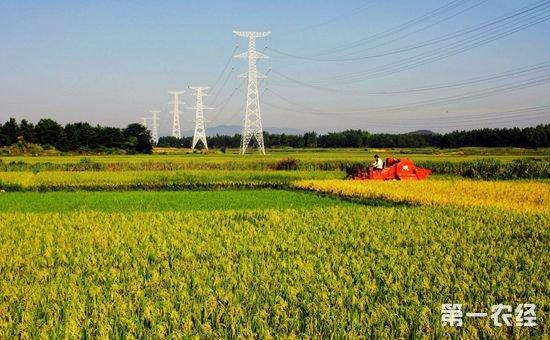 农村土地政策新变化 无地农民可重新获得土地