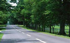江苏南京:着力推动乡间道路绿化 推进美丽乡村建设
