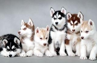 【宠物狗饲养专题】狗的品种与饲养方法|狗病大全