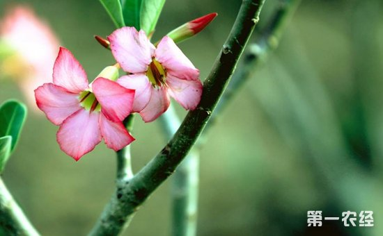 8种不用勤浇水也能活的盆栽植物介绍!简直是懒人必备