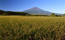 <b>从秋粮丰收看中国农业改革成效:绿色发展之路更清晰</b>