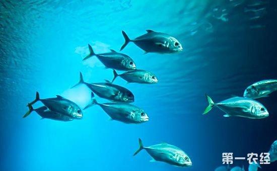研究称全球海洋日益酸化 所有海洋生物都将因此遭殃