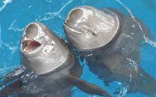 我国第三次长江江豚科学考察将起航 将进行全面的摸底调查