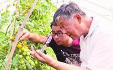村官王忠立:不忘初心种植有机蔬菜 带领乡亲实现脱贫致富