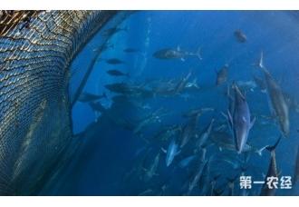 墨西哥或将建禁止捕捞海洋公园