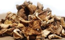 <b>误食野生毒蘑菇中毒事件时有发生 专家:食用干野蘑菇同样有危险</b>