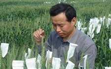 山东农科院构建四大作物分子育种平台