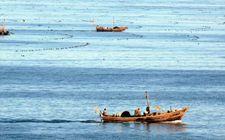 """<b>推动我国渔业转型升级 转变发展方式做""""减法""""</b>"""