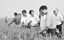 国家863计划绿色超级稻项目取得丰硕成果
