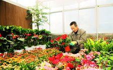 甘肃省景观花卉产业已成为经济增长的亮点和最具活力的朝阳产业