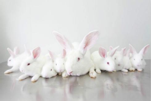 """三十年实现兔子养殖""""三级跳""""——""""养兔达人""""的致富经"""