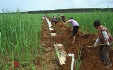陕西:小型农田水利及高效节水灌溉工程 惠及大民生