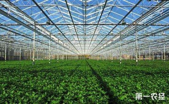 安徽省将建一批省级现代农业产业园 推动农业供给侧改革