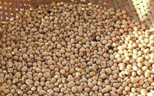 乌克兰农产品库存:谷物和大豆库存下降14%