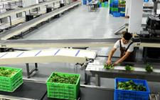 有机蔬菜P2C宅配革新 本来生活引领未来市场