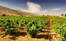 日本与俄阿穆尔州商谈农业领域合作