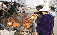 老吃淘汰鸡有害吗?蛋鸡淘汰后有营养吗?