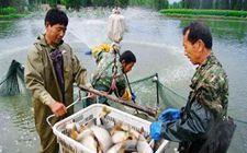 上海举行水产行业农民技能大赛 彰显渔业专业合作社