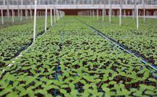 广东:科技成果转化为现实生产力 服务农业产业发展