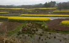 解读农村土地承包法修订案 重在尊重农民意愿