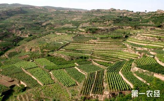 新《土地承包法》即将出台 这细节值得农民朋友们关注!
