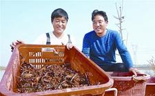 河南正阳:龙虾养殖助116户贫困户走上脱贫致富路