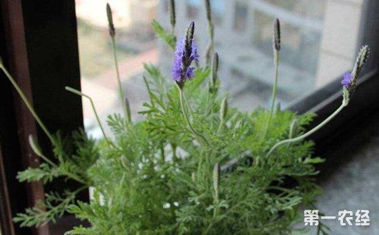 5种有助于睡眠的盆栽植物介绍!养在卧室里准没错