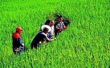 江苏加大科技投入 一千六百余项成果重塑农业盛景