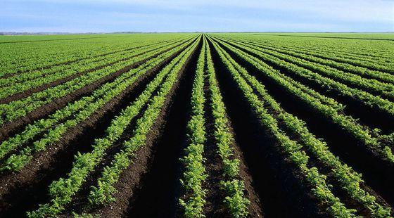 """我国种业企业需以""""种子+""""延伸产业链 由卖种子向卖材料和服务转型"""
