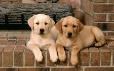 <b>秋冬季宠物容易得的疾病有哪些?秋冬季宠物易患疾病介绍</b>