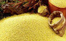 """""""中国—联合国粮农组织南南合作计划""""正式启动 推动粮食系统创新"""